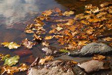 Free Autumn Pond Royalty Free Stock Image - 8566616