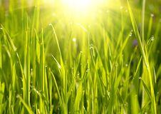 Free Green Grass Sunset Stock Image - 8566781