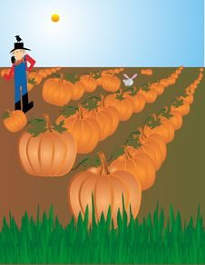 Free Pumpkin Patch Illustration Royalty Free Stock Photo - 8566945