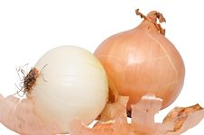 Free Onions Royalty Free Stock Image - 8566996