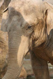 Free Elephant Stock Photo - 8567530