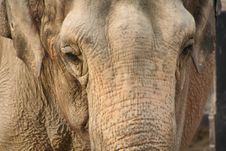 Free Elephant Stock Images - 8567564