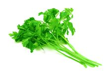 Free Bunch Of Parsley. Stock Photo - 8568300