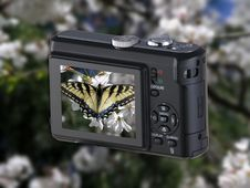 Free Point & Shoot Camera With Butterfly Royalty Free Stock Photography - 8569867