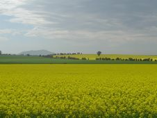 Green And Gold Fields Royalty Free Stock Photo