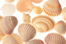 Seashells On White Background Stock Photos