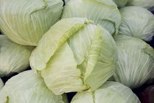 Free Cabbage Stock Images - 8573084