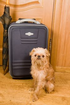 Suitcase, Umbrella And Dog. Stock Photo