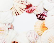 Free Shell Background Stock Photos - 8574073