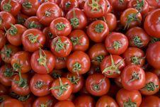 Free Tomato Stock Images - 8574164