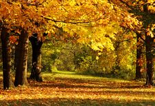 Free Autumn In The Park Royalty Free Stock Image - 8574226