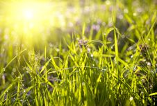 Free Green Grass Sunset Royalty Free Stock Photos - 8574248