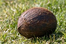 Free Coconut In Grass Royalty Free Stock Image - 8575886