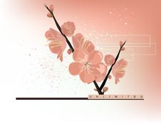 Free Spring Flower Background Stock Images - 8577084