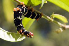 Free Caterpillar Royalty Free Stock Images - 8578779