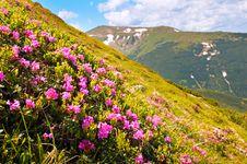 Free Summer Mountain View Royalty Free Stock Photo - 8579735