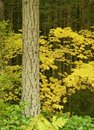 Free Autumn Forest Scene Royalty Free Stock Image - 8583746