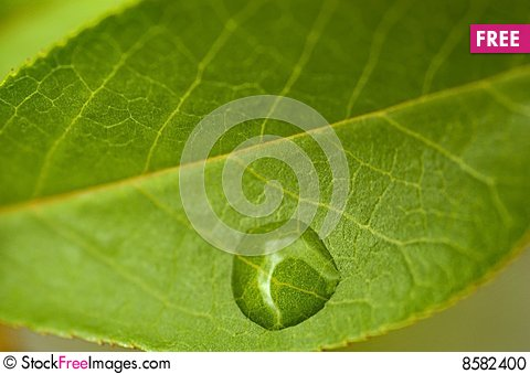 Free Early Spring Leaf Stock Photo - 8582400