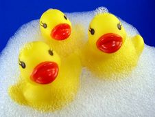 Free Rubber Duckies With Suds Royalty Free Stock Photos - 8582578
