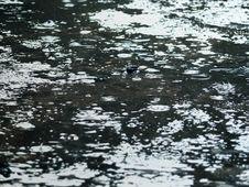 Free Rain On Asphalt. Drops. Stock Photos - 8583813