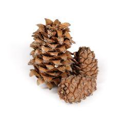 Free Three Cones On White Background Stock Photos - 8584623