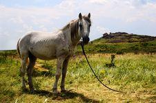 Free White Horse Royalty Free Stock Photo - 8584895