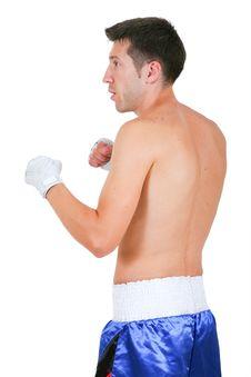 Free Boxer Royalty Free Stock Photo - 8584945