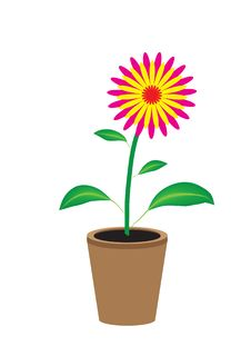 Free Varicoloured Flower Stock Photo - 8585360