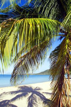 Free Palm Tree Stock Photo - 8586080