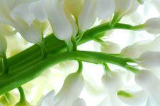 Free Hyacinth Royalty Free Stock Image - 8586666