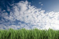 Free Grass And Sky Royalty Free Stock Images - 8587469