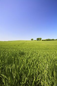 Free A Fresh And Bright Green Field In Spring Stock Photography - 8588542
