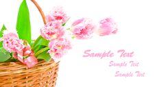 Free Tulips In Basket Royalty Free Stock Image - 8589166