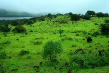 Free Vibrant Monsoon Greenery Royalty Free Stock Photos - 8589228