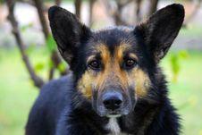 Free Black Dog Royalty Free Stock Photography - 8589297