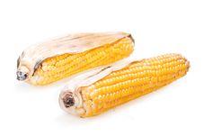 Free Corn Stock Photography - 8589482