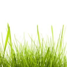 Free Grass Isolated On White Stock Photo - 8589520