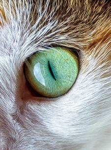 Free Cat Eye Stock Images - 85818604