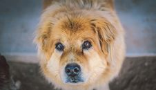 Free Close Up Of Cute Dog Looking At The Camera Royalty Free Stock Image - 85818856