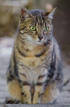 Free Cat Royalty Free Stock Photos - 85818968