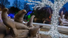 Free Lion Around The Tree Stock Images - 85824724