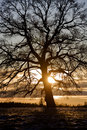 Free Tree In Backlight Royalty Free Stock Image - 8590806