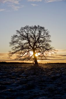Free Tree In Backlight Royalty Free Stock Photo - 8590795