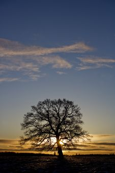 Free Tree In Sundown Stock Photo - 8590810