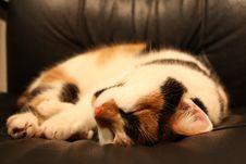 Free Sleeping Cat Royalty Free Stock Photo - 8591745