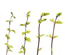 Free Plant Isolated Royalty Free Stock Images - 8594549