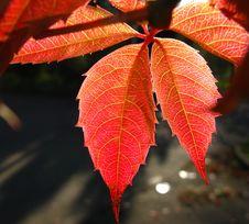 Free Foliage Stock Images - 8596444