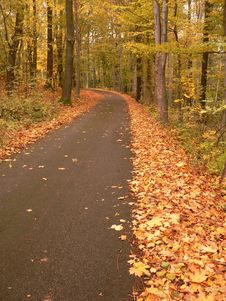Free Autumn Road Stock Photography - 8597252