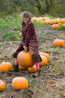 Free Pretty Child Picking A Pumpkin Stock Images - 8599464