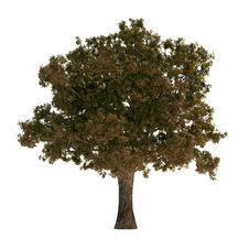 Free Autumn Tree Stock Photo - 8599730